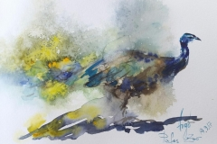 Skizzen / Pafos Bird and Animal Park / Aquarell / 14,5 x 10,5